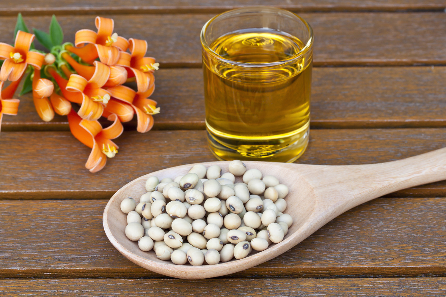 4 Reasons Soybean Oil Makes for Healthy Eating & Cooking, photo by Hispanic Kitchen